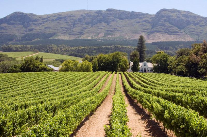 paarl-winelands