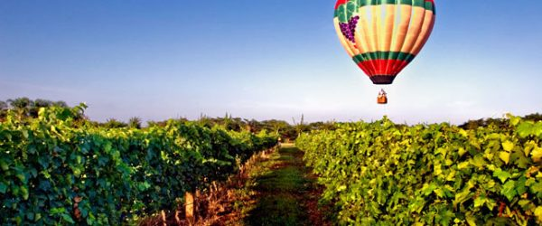Balloon over the Vineyards