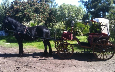 Carriage Ride around Rhebokskloof Estate