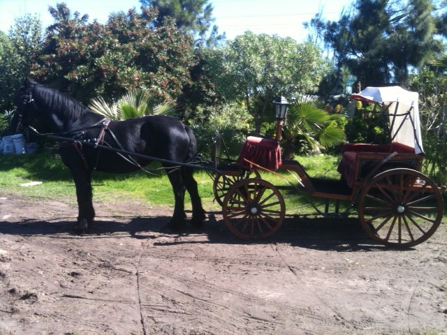 TRADITIONAL-CARRIAGES-2